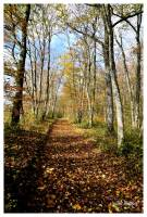 automne-chemin