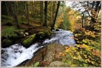 automne-falgoux2