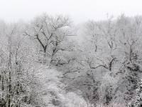 arbres-enneiges