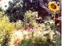 jardins_bassignac