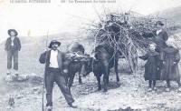 transport-bois-mort