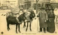 transport-anes-maurs