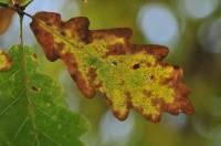 automne-branviel