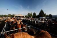 chevaux_maurs1