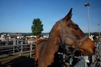 chevaux_maurs11