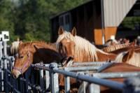 chevaux_maurs13