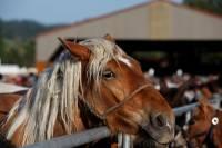 chevaux_maurs15