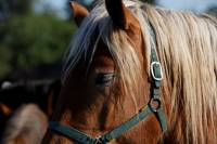 chevaux_maurs16