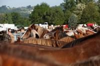 chevaux_maurs17
