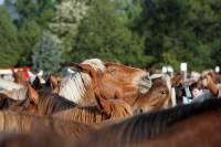 chevaux_maurs18