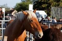 chevaux_maurs19