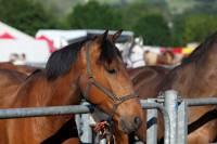 chevaux_maurs22