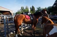 chevaux_maurs3