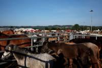 chevaux_maurs7