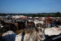 chevaux_maurs9