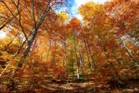 automne_vallee_mandailles5