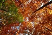 automne_vallee_mandailles6