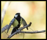 oiseaux_automne1