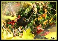 oiseaux_automne10
