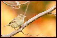 oiseaux_automne7