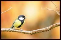 oiseaux_automne8
