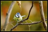 oiseaux_automne2
