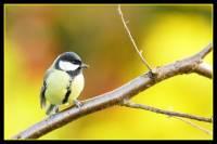 oiseaux_automne3