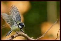 oiseaux_automne4