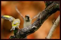 oiseaux_automne5