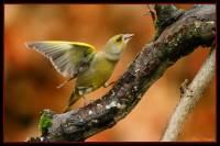 oiseaux_automne6