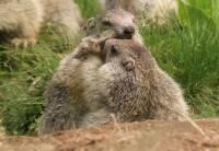 marmottes-jeu2