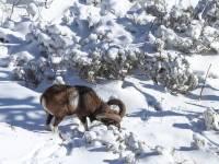 mouflon-quete